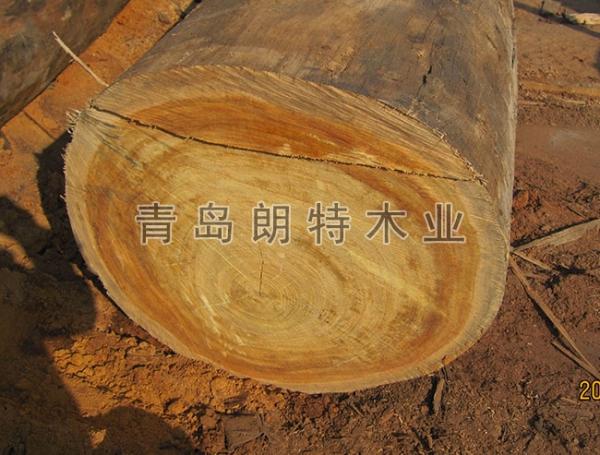 黄岛红柳桉